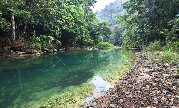 Bladen River and Dense Jungle in Belize - Stock Photo - Images