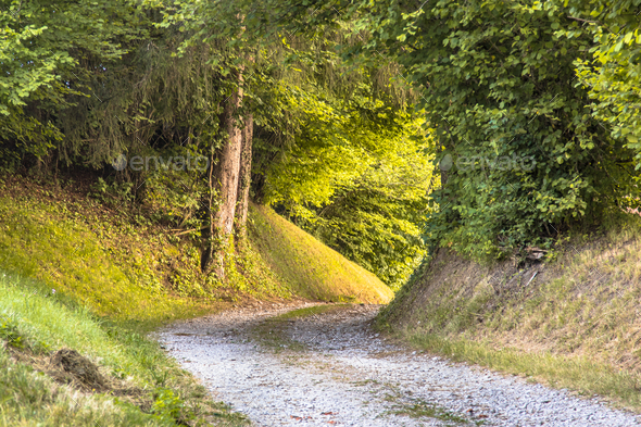 Tunnel of Foliage in unpaved rural road - Stock Photo - Images