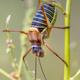 Saddle backed bush cricket - PhotoDune Item for Sale