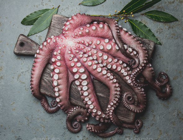 Raw fresh octopus on wooden table with laurel. Top view. - Stock Photo - Images