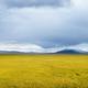 qinghai grassland scenery - PhotoDune Item for Sale