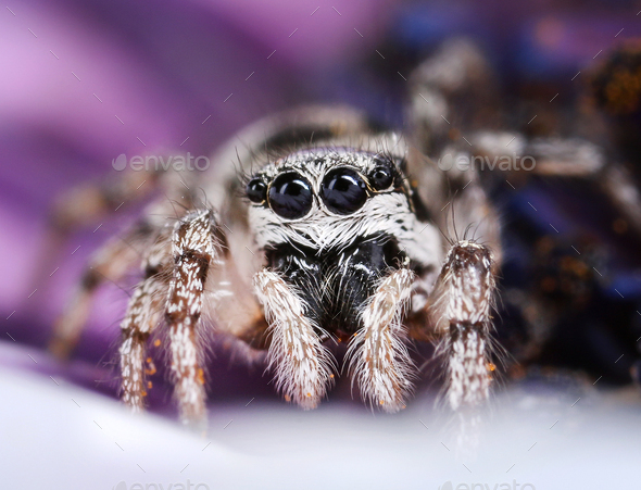 Cute jumping spider - Stock Photo - Images