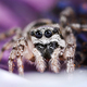 Cute jumping spider - PhotoDune Item for Sale