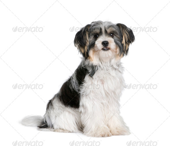 Bastard dog sitting in front of white background, studio shot - Stock Photo - Images