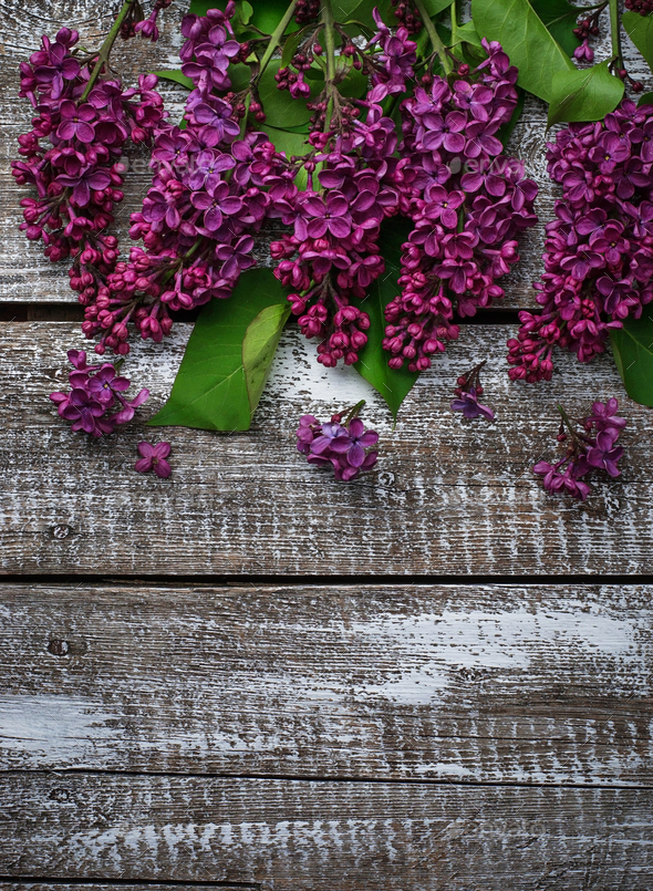 Flower lilac on a wooden background - Stock Photo - Images