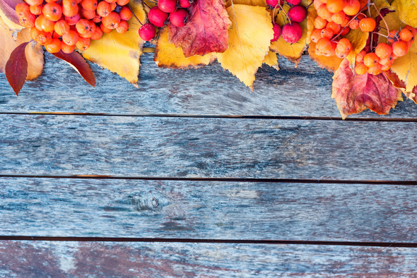 Thematic autumn flatlay background. Wooden planks, red leaves and berries - Stock Photo - Images