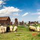Sheep graze in Noratus - PhotoDune Item for Sale