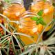 Vitaminic healthy sea buckthorn tea - PhotoDune Item for Sale