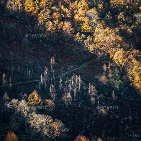 Autumn Lights  between Meadows and Deciduous Forests - Stock Photo - Images