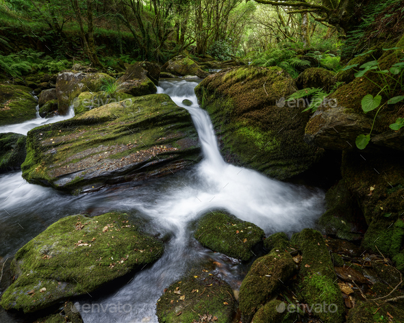 Small Waterfall between Mossy Rocks and Lush Vegetation - Stock Photo - Images