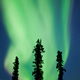 Yukon taiga spruce Northern Lights Aurora borealis - PhotoDune Item for Sale