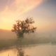 Reflection of a tree in a misty spring morning - PhotoDune Item for Sale