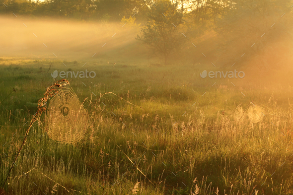 Panorama of the first rays of the rising sun - Stock Photo - Images