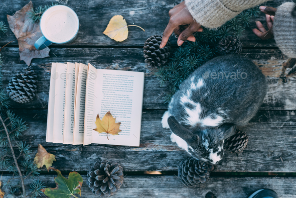 Woman hands decorating a table with a cute bunny pet and Book on - Stock Photo - Images