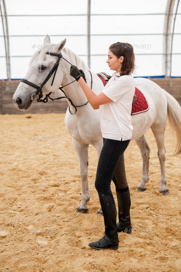 Young active female taking care of white purebred racehorse on sandy arena - Stock Photo - Images
