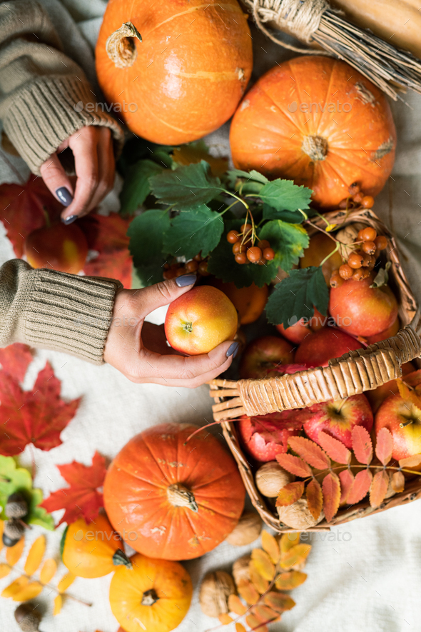 Woman taking apple from basket standing on table among ripe pumpkins and leaves - Stock Photo - Images