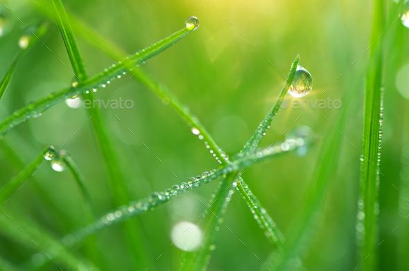 Macro of dew. - Stock Photo - Images