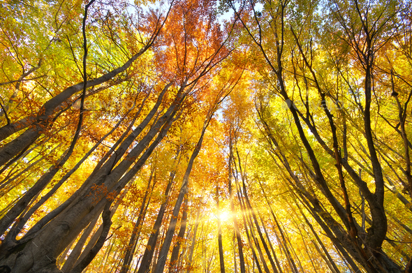 Into the autumn forest. - Stock Photo - Images