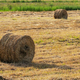 Yellow Rolls of Hay on Mowed Field on Sunny Day, Dry Weather in Which Agricultural Work is Good - PhotoDune Item for Sale
