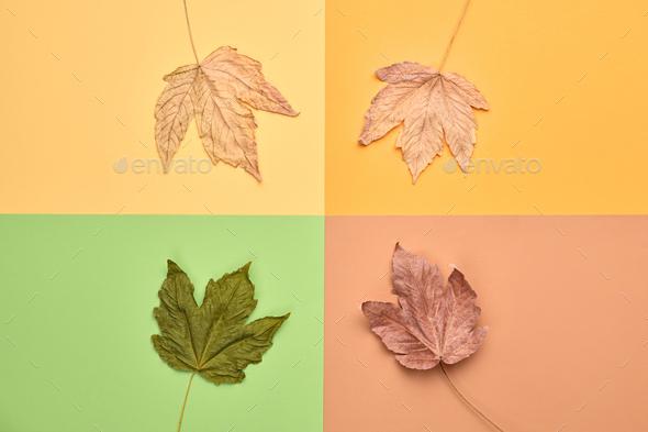 Autumn - Stock Photo - Images