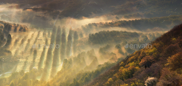 Misty valley - Stock Photo - Images