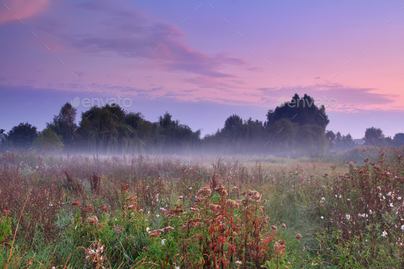 Misty morning on the field - Stock Photo - Images