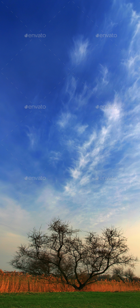 Blue sky with clouds above the tree - Stock Photo - Images