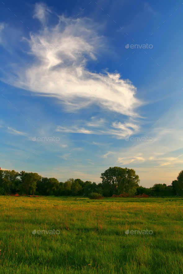 Field on a summer evening - Stock Photo - Images
