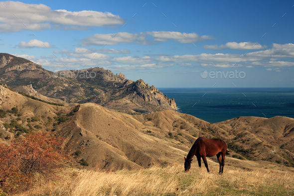 Wild horse on the sea landscape - Stock Photo - Images
