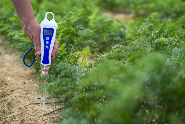 Measure soil with digital device. Green plants and woman farmer - Stock Photo - Images