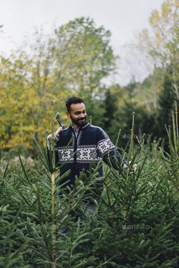 Young adult man choosing a christmas tree at the farm - Stock Photo - Images