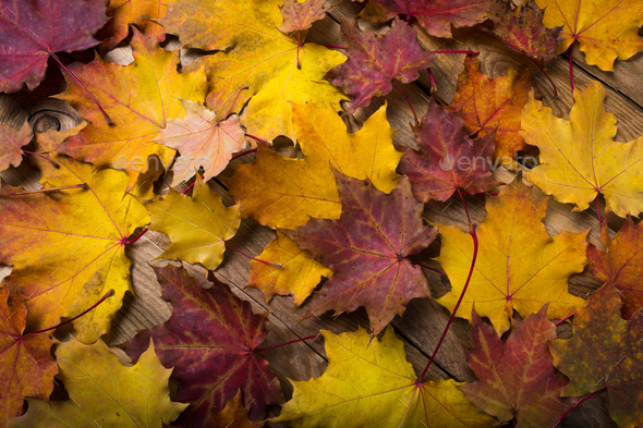 Rustic table with fall maple leaves - Stock Photo - Images