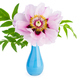 Peony suffruticosa flower in blue ceramic vase - PhotoDune Item for Sale