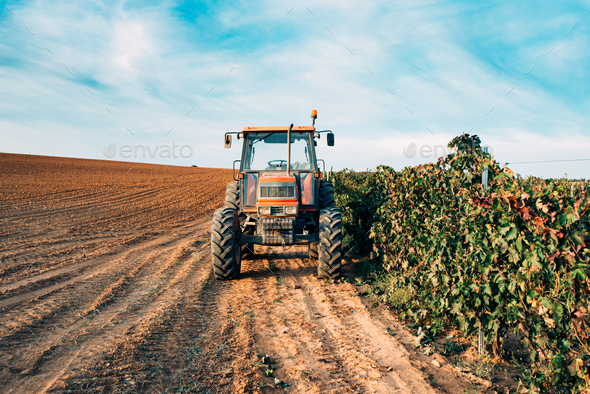 Tractor in a vineyard - Stock Photo - Images