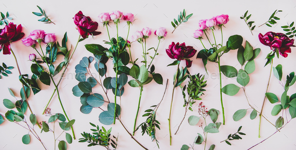 Flat-lay of purple peonies, pink roses and green branches - Stock Photo - Images