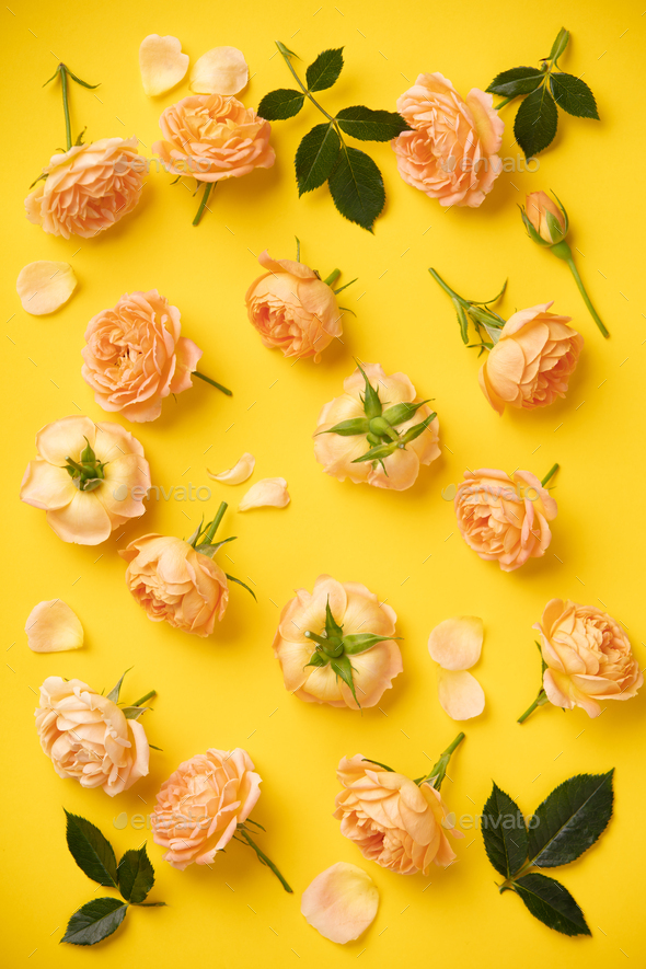 Floral pattern with pink roses and leaves on yellow background, flat lay - Stock Photo - Images