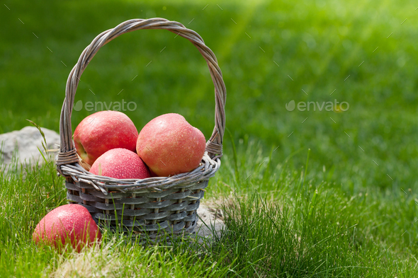 Fresh garden green and red apples in basket - Stock Photo - Images