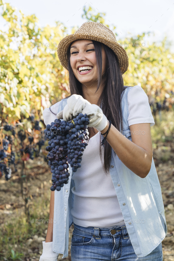 beautiful young woman holding a large grape while harvesting - Stock Photo - Images