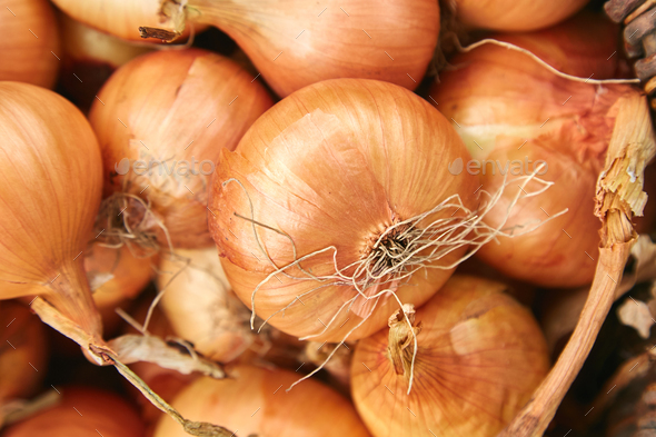 Fresh onions harvest  in wooden basket on grass. - Stock Photo - Images