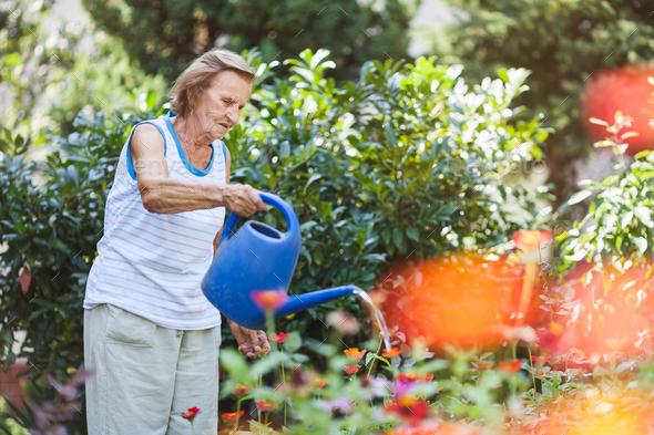Elderly woman watering plants in her garden - Stock Photo - Images