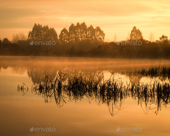 Fog over the Lake and between the Reeds - Stock Photo - Images