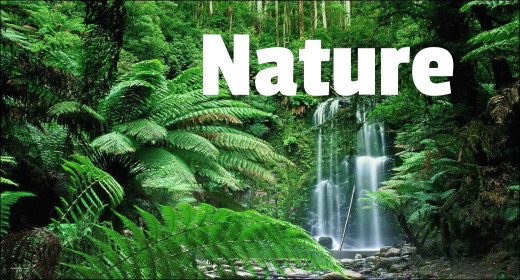 Real Nature Sound FX