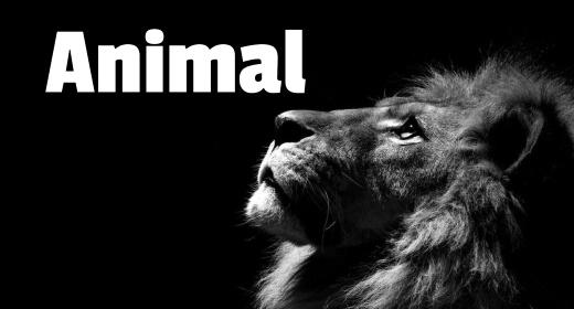 Animal Sound FX