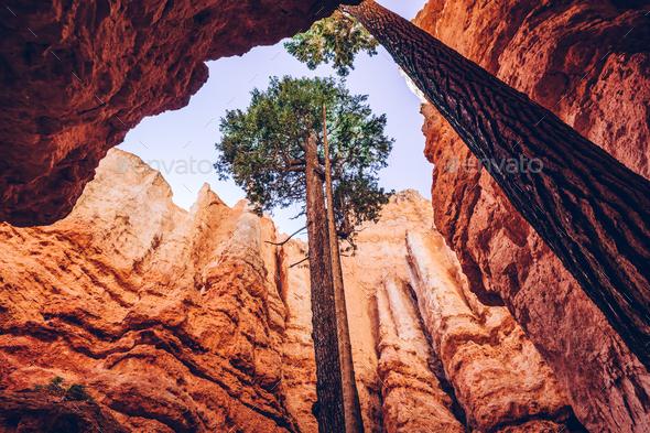 Bryce Canyon, Utah, USA. Single trees - Stock Photo - Images