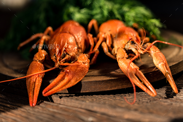 Boiled crayfish on rustic wooden background close - Stock Photo - Images