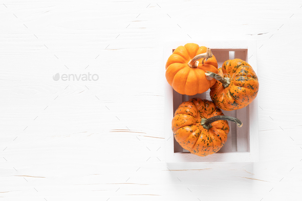 Small decorative pumpkins on white white background - Stock Photo - Images
