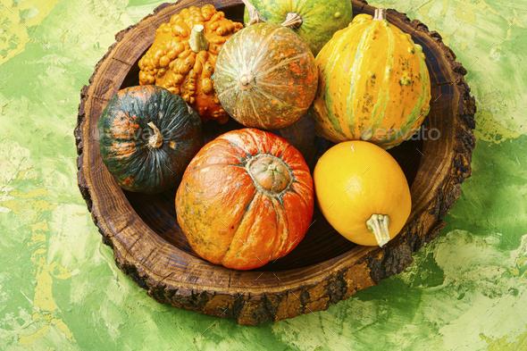 Assortment of autumn pumpkins - Stock Photo - Images