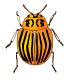 Colorado potato beetle - GraphicRiver Item for Sale