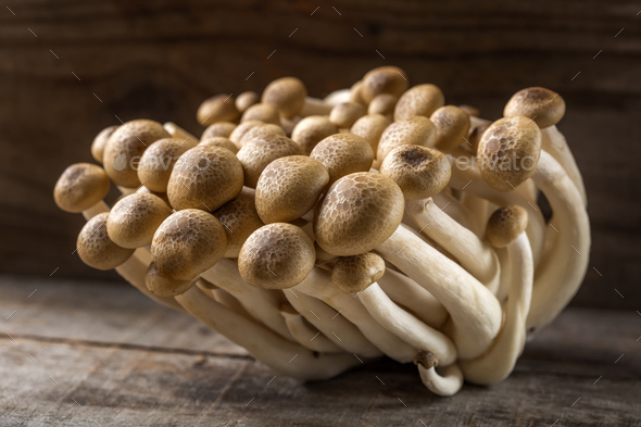 shimeji mushrooms - Stock Photo - Images