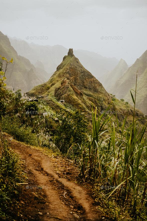 Trekking route 202 along sugarcane vegetation going across the Xo-Xo valley to Ribeira Grande. Santo - Stock Photo - Images